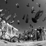 Голуби в Шринагаре, Кашмир, Индия - Kartzon Dream - тревел фото, тревел видео, авторские путешествия, фототуры