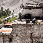 Урожай. Деревня Дамкар, Ладакх, Индия - Kartzon Dream - тревел фото, тревел видео, авторские путешествия, фототуры