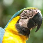 Попугай Ара, Перу - Kartzon Dream - тревел фото, тревел видео, авторские путешествия, фототуры