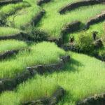 Урожай. Склоны Гималаев, Индия - Kartzon Dream - тревел фото, тревел видео, авторские путешествия, фототуры