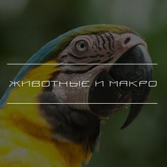 Животные и макро. Тревел фото Kartazon Dream - авторские путешествия, авторские туры, северная индия туры