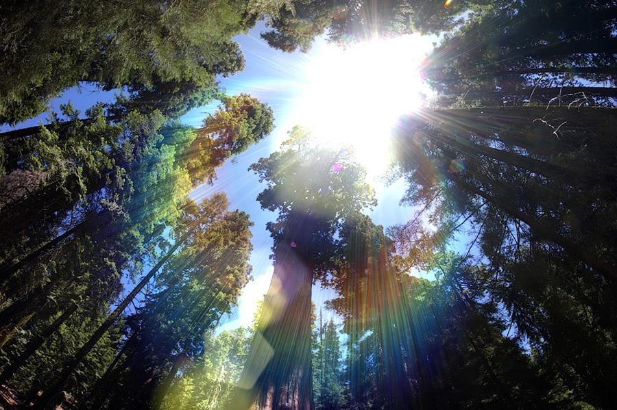 Национальный парк Секвойя, США 2013