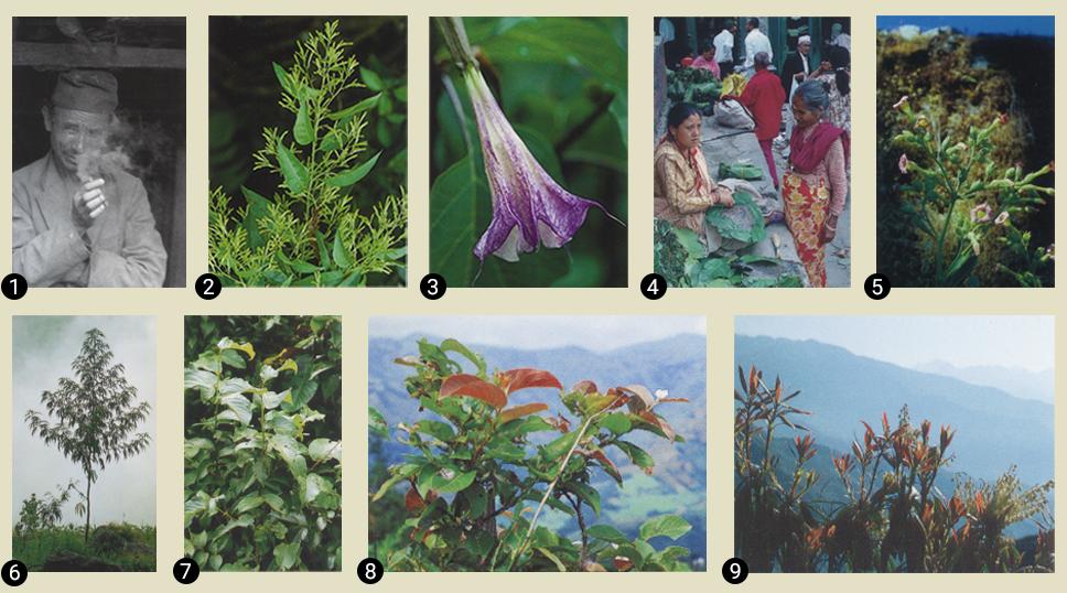 Сад Шивы. Шаманские растения Непала для путешествий. Шаманизм и Тантра в Гималаях.Клаудия Мюллер-Эбелинг, Кристиан Рэч, Сурендра Бахадур Шахи