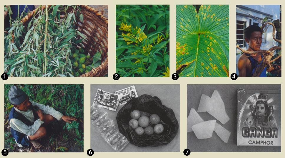 Сад Шивы. Шаманские растения Непала для путешествий